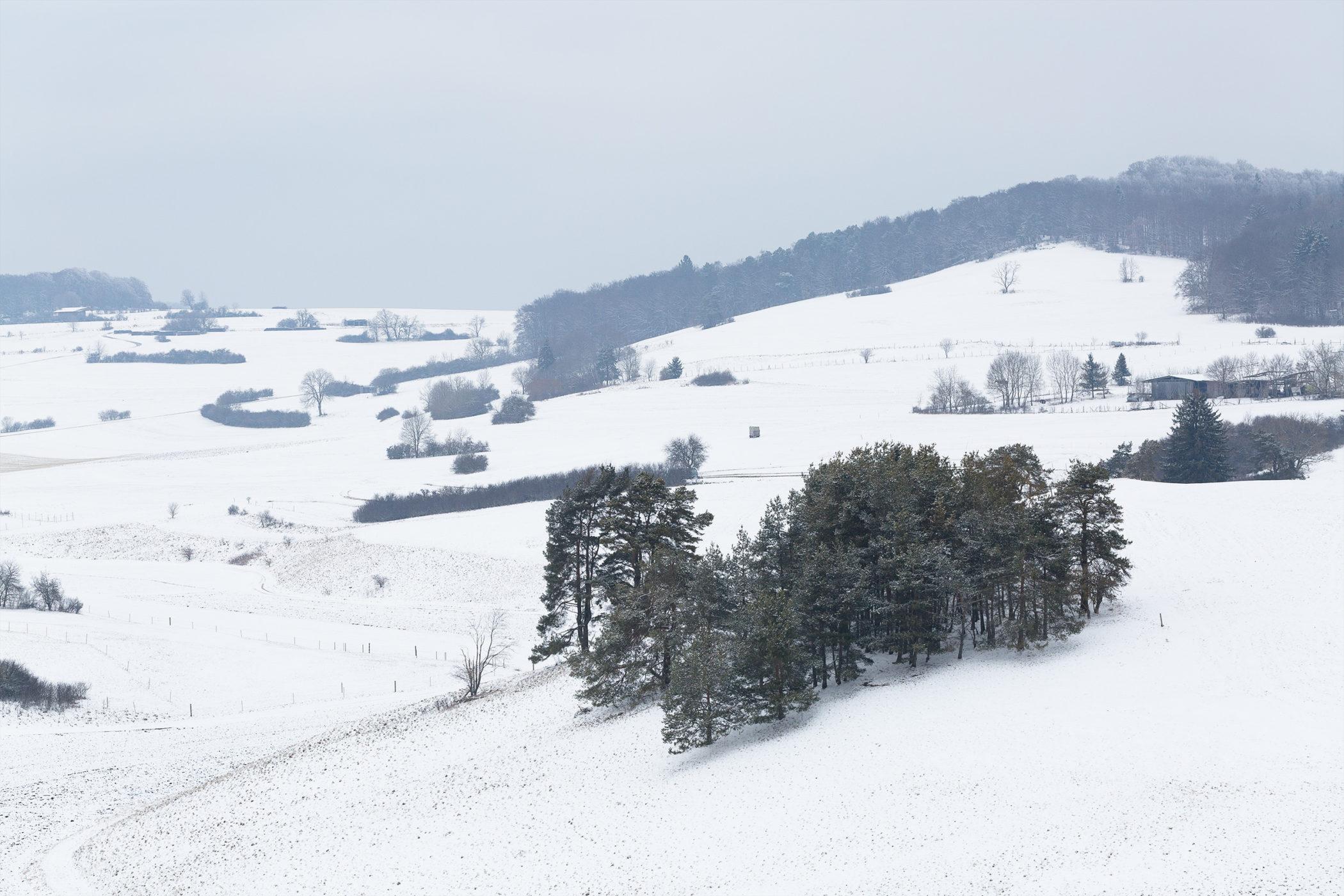 Baumgruppe auf der winterlich verschneiten Schwäbischen Alb. Aufgenommen bei Undingen am Kalkfelsen.