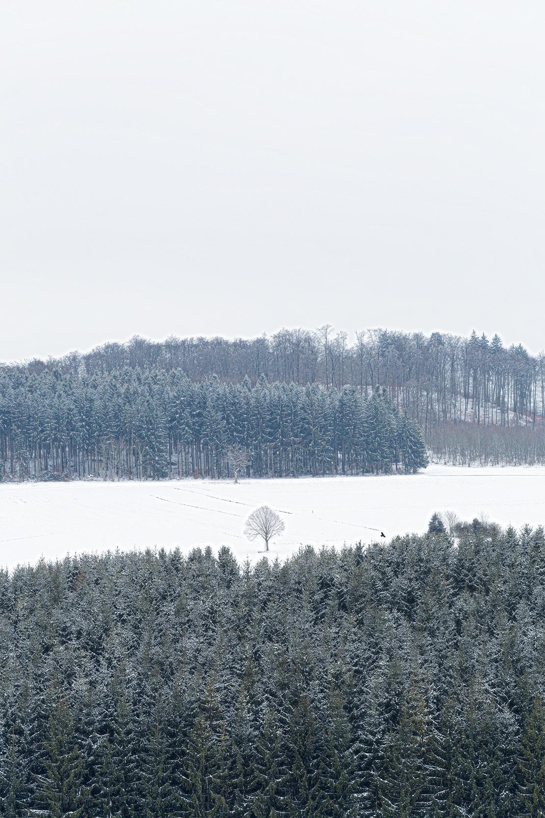 Ein einzelner Baum in einer Waldlichtung auf der Schwäbischen Alb im Schnee bei Undingen.