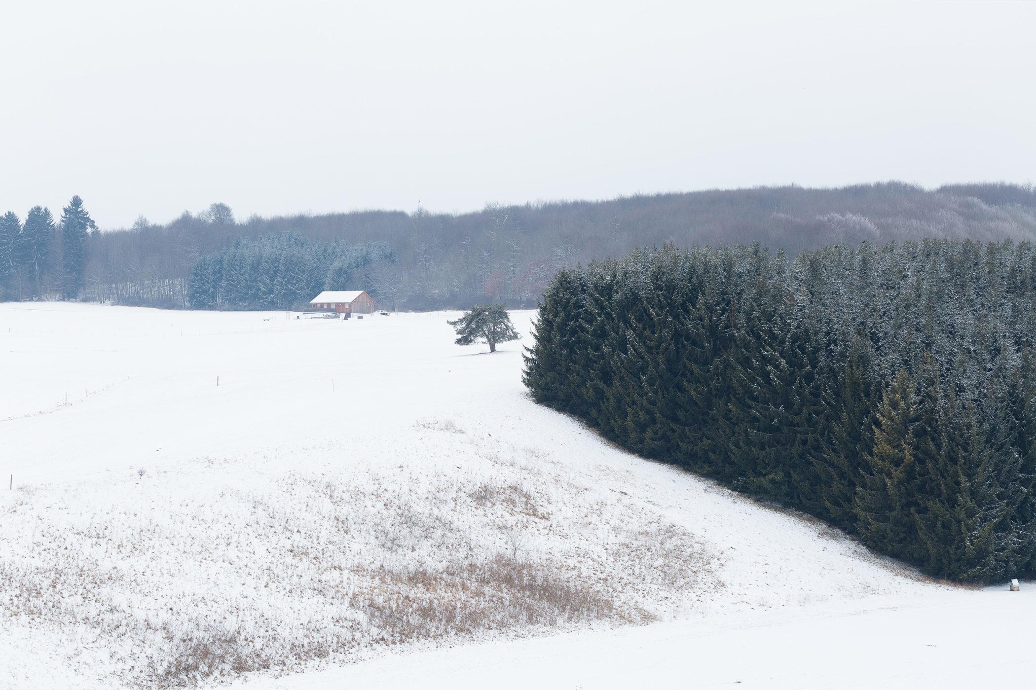 Ein Wald mit Hof im Hintergrund im Schnee.