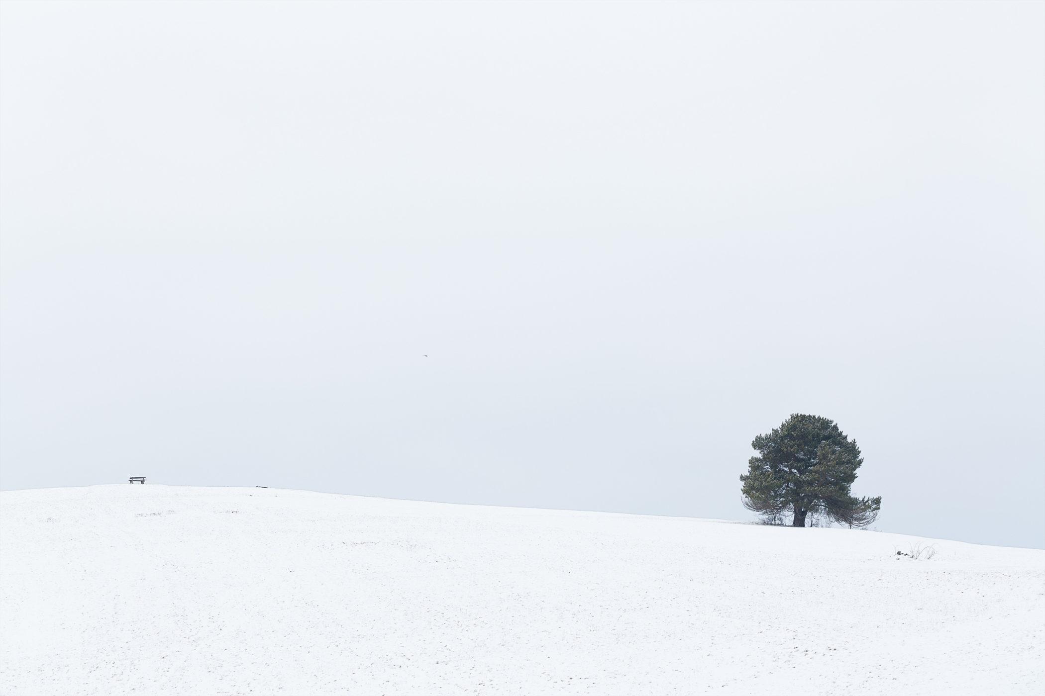 Ein freistehender Baum auf dem verschneiten Aussichtspunkt Kalkstein nahe Undingen.