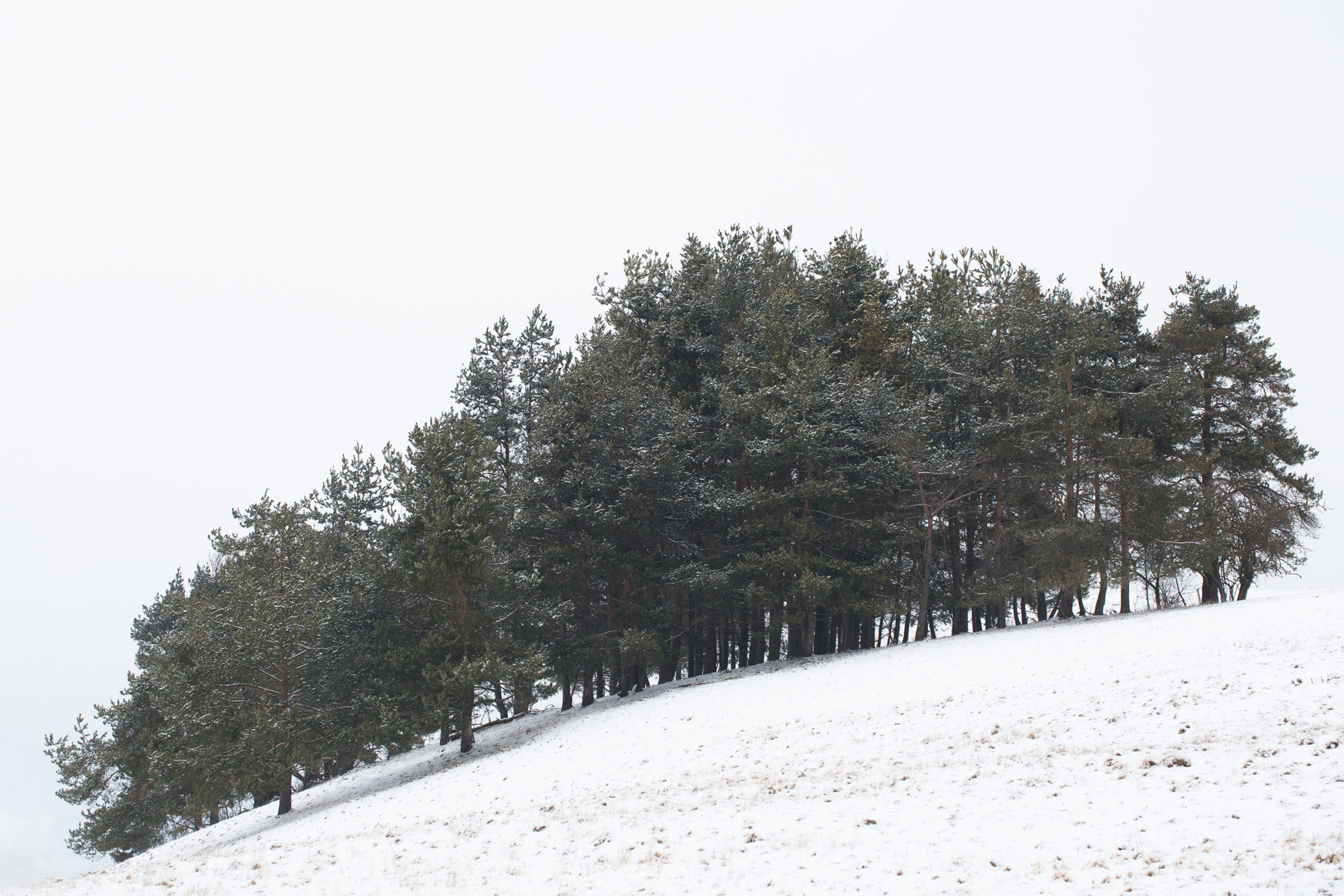 Großaufnahme einer Baumgruppe im Schnee bei Undingen am Kalkfelsen auf der Schwäbischen Alb.